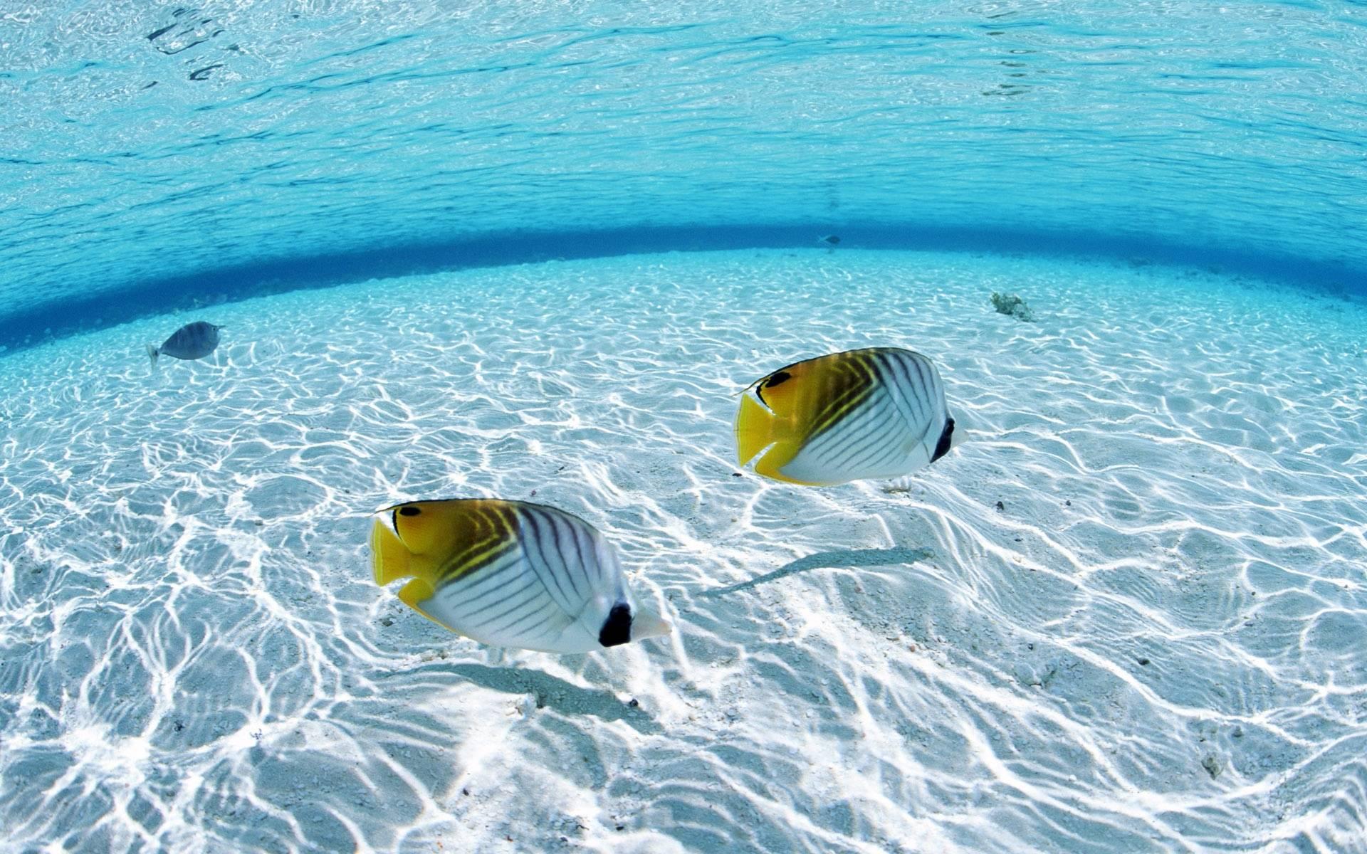fish in water david kravitz coaching